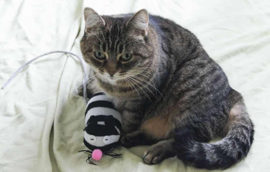 Adventskalender für Katzen und Hunde - eine kleine ...