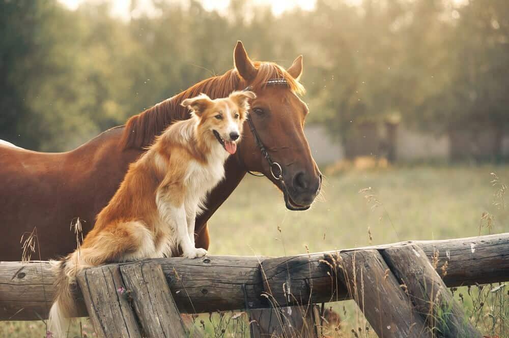 Tierfilme