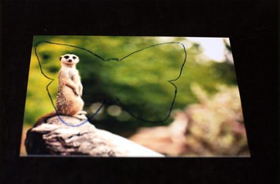 DIY: Fotoschmetterlinge selber machen