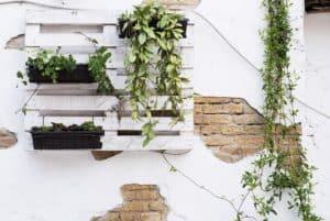 Grüner wohnen mit Wandgarten