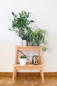 Grüner wohnen mit pflegeleichten Pflanzen